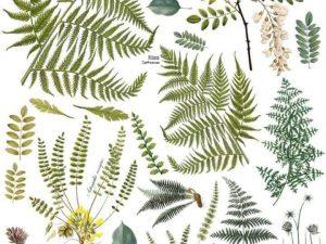 IOD Transfer Frond Botanical